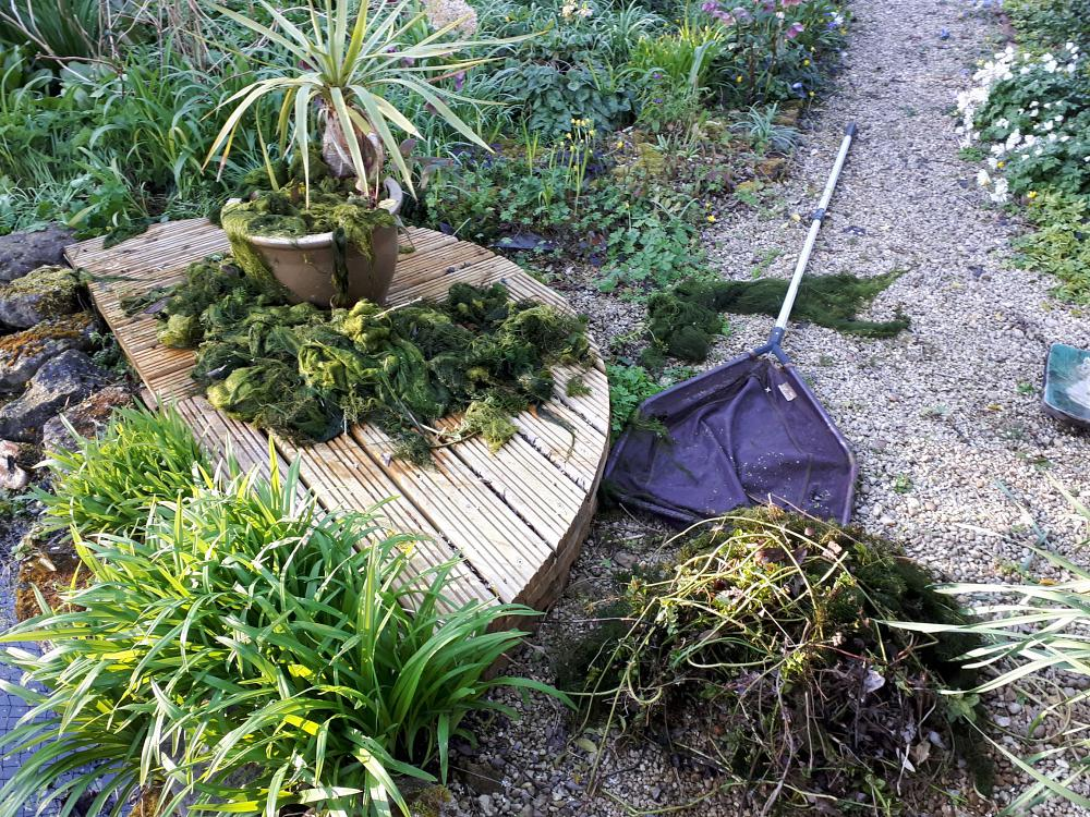 Tackle blanket weed in ponds