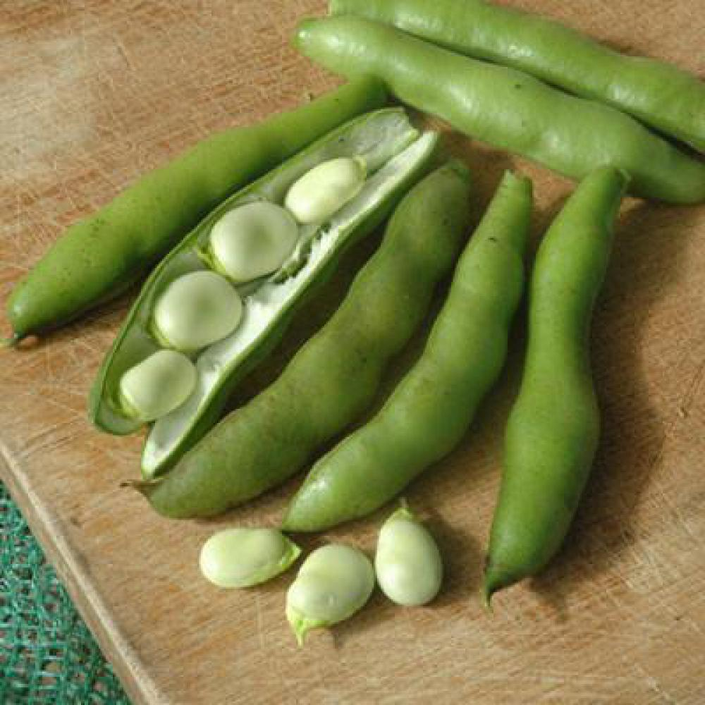 Choose tender broad beans