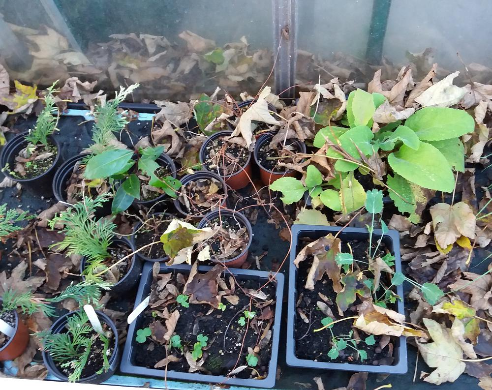 clean up your cold frame